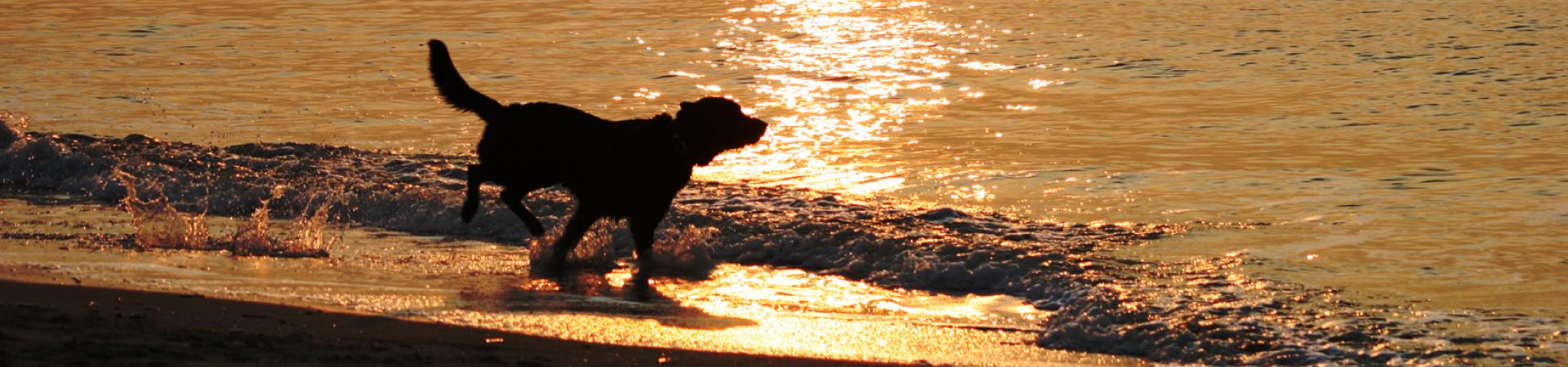 Hondenmassage en beweging bij honden
